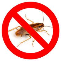 Борьба с тараканами. Как избавиться от тараканов