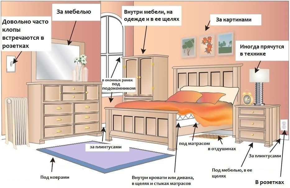 https://antigryzun.ru/images/upload/klopov_mesta.jpg